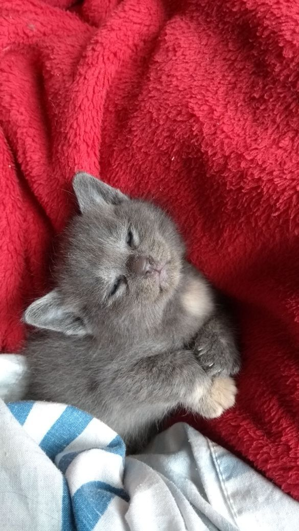 Say Hello To Gaia My New Kitten She Is Only 4 Weeks Old Http Ift