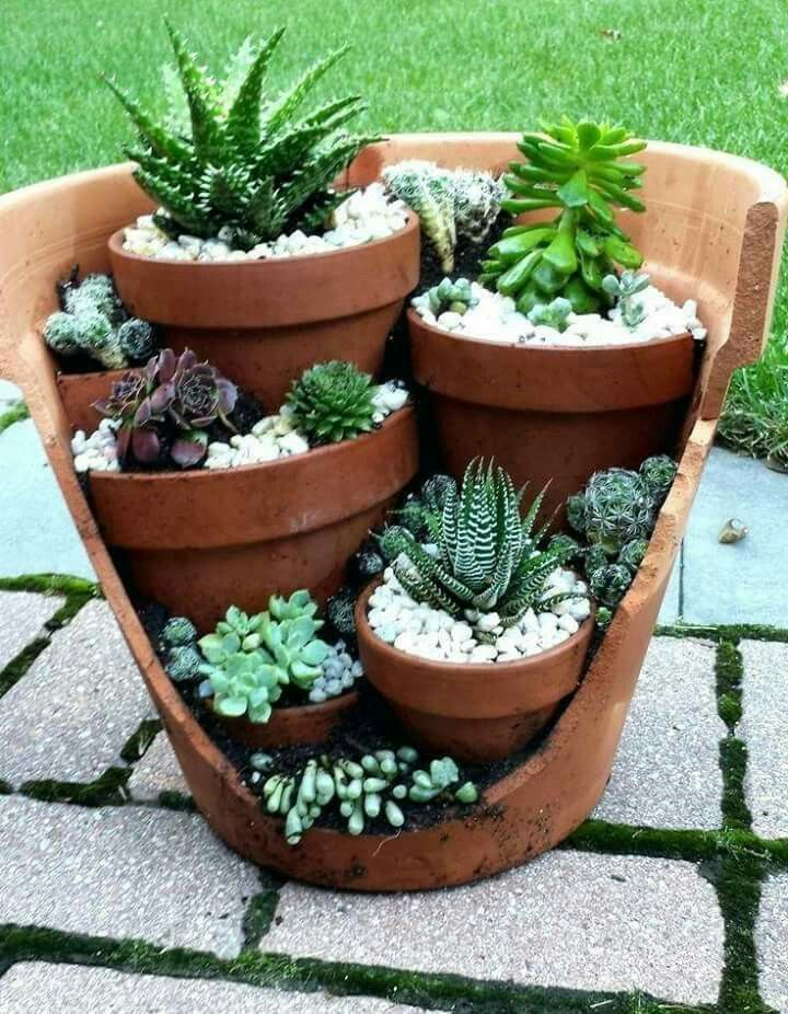 Photo of Topdressing succulents