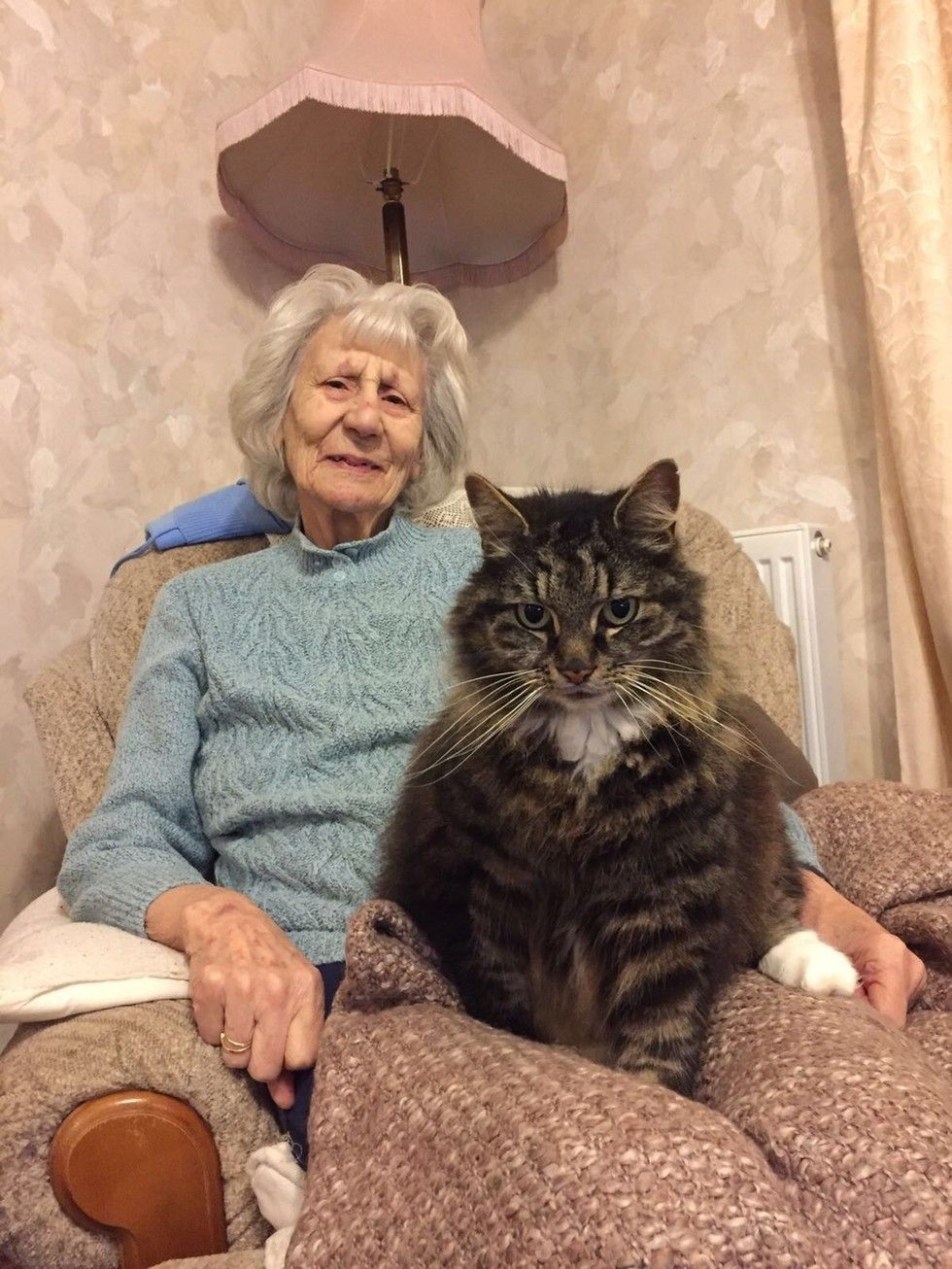 """A beautiful tabby cat named Rio became the love of a grandmother's life 13 years ago. Rio hasn't left her side since the day they met. Grandma Stella turned 90 this week. This is her and the love of her life, Rio!         Courtesy: Courtney Stella         """"She turned 90 this week, and that cat Rio i..."""