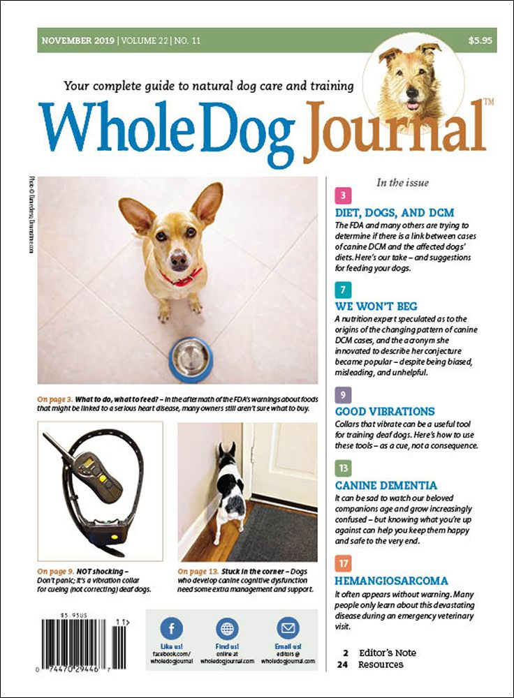 Download the Full November 2019 Issue Dogs, Dog care