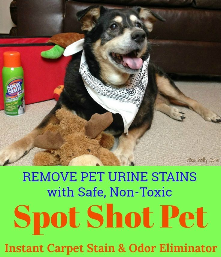 Remove Pet Urine Stains With Safe And Non Toxic Spot Shot Pet Instant Carpet Stain Odor Eliminator Spotshot Pet Urine Urine Stains Pets