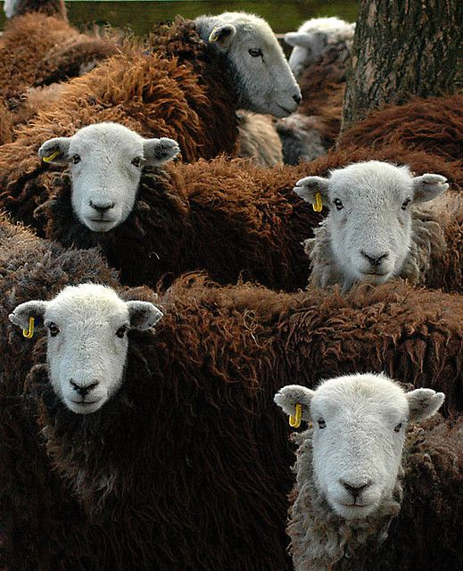 15++ Lamb farm near me information