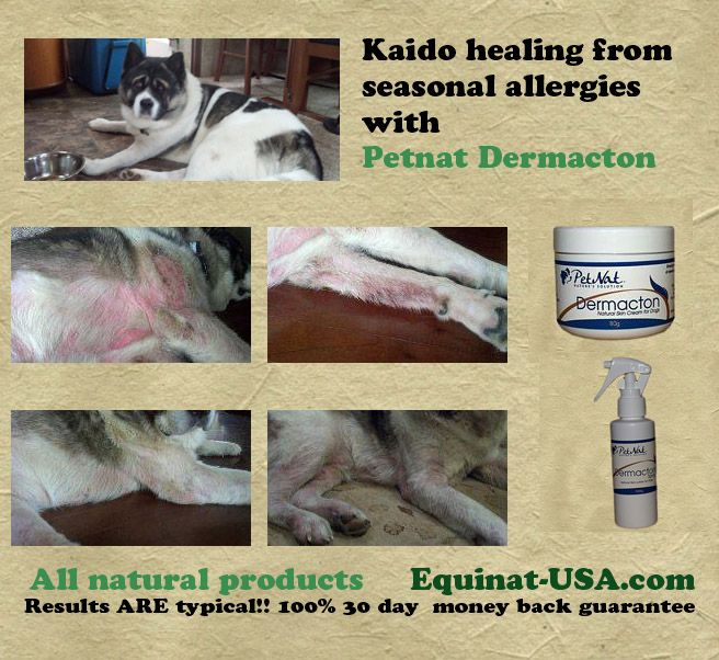 Dermacton Reviews Dog allergies, Dog skin, Dog rash