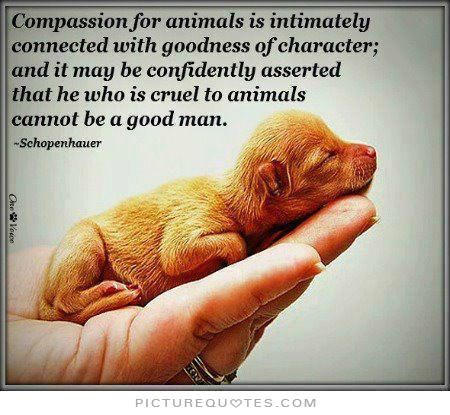 Love Animals Quotes Interesting Cruelty To Animals Quotes Google Search For The Love Of Animals
