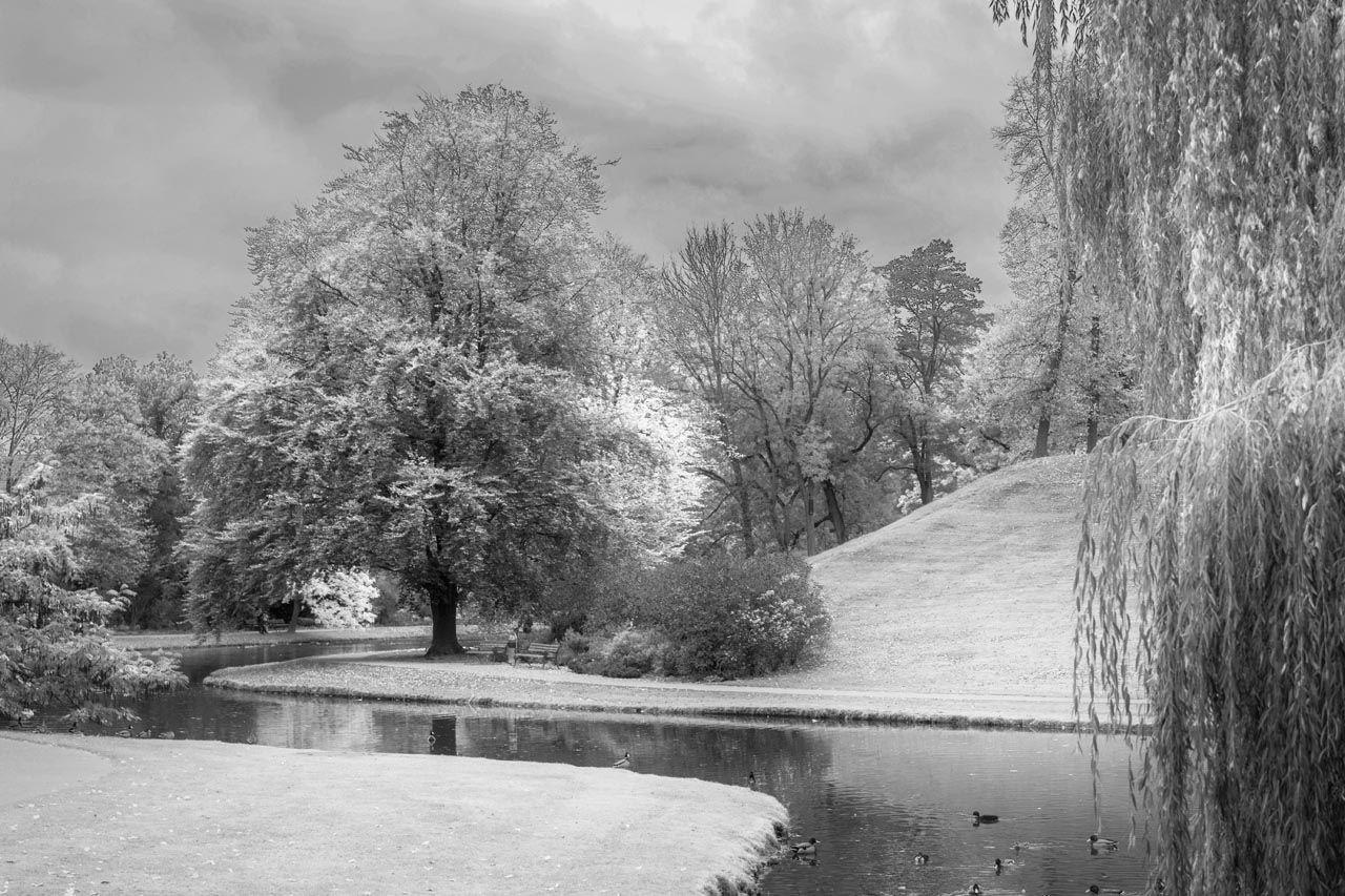Celle Im Herbst Schwarz Weiß Aufnahmen In Herbstlicher Stimmung Schwarz Weiß Foto Herbst Schwarz Weiß Fotos