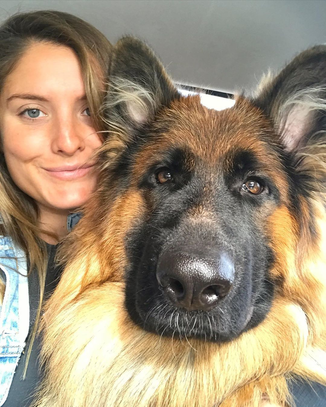 Instagram Downtowndutchie Germanshepherd Gsd Puppy Cute