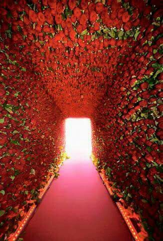 Tunnel De Roses Boda Wedding Decorations Wedding