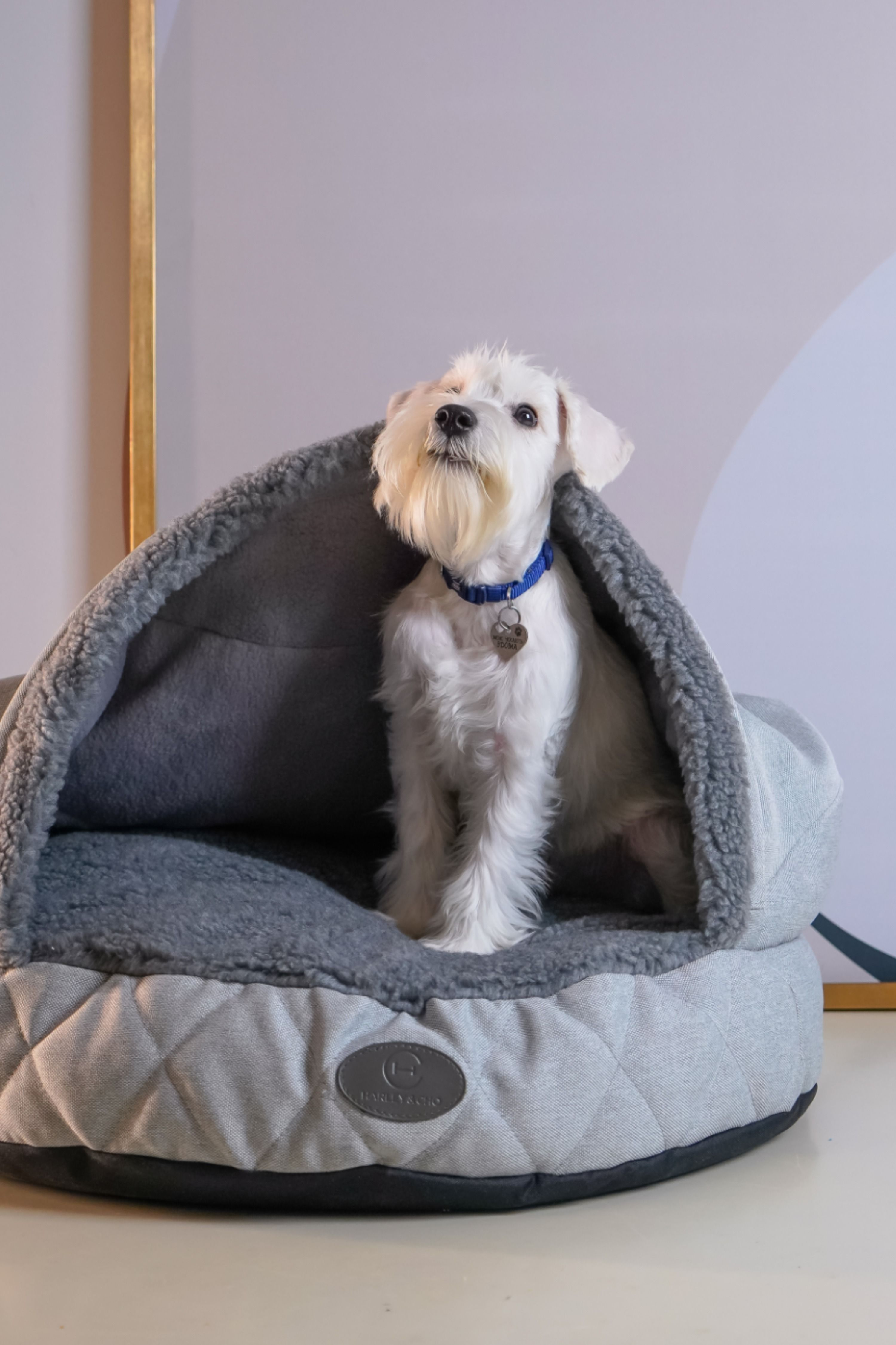 Plush Cave Bed For Dog Bed Cave Snuggly Bedding Italian Greyhound Sleeping Bags Snuggle Bags For Iggy In 2021 Pet Safety Italian Greyhound Cat Bed
