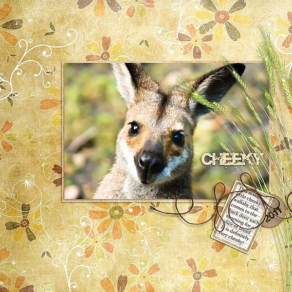 8x8_WALLABY_-_CHEEKY