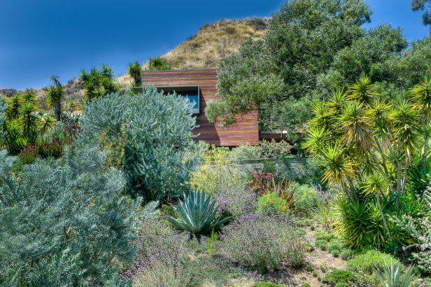 Cool desert garden