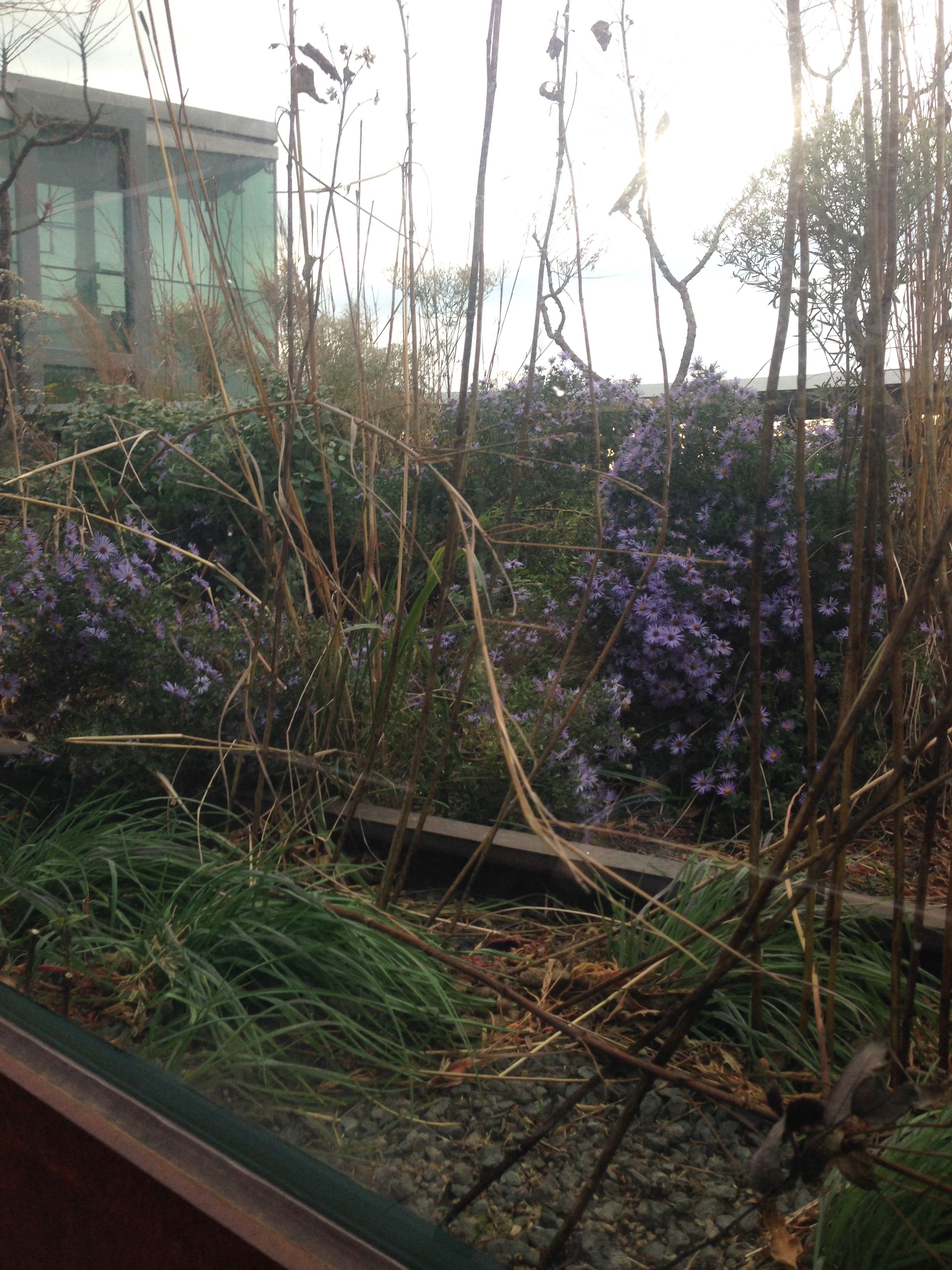 Nature at the High Line