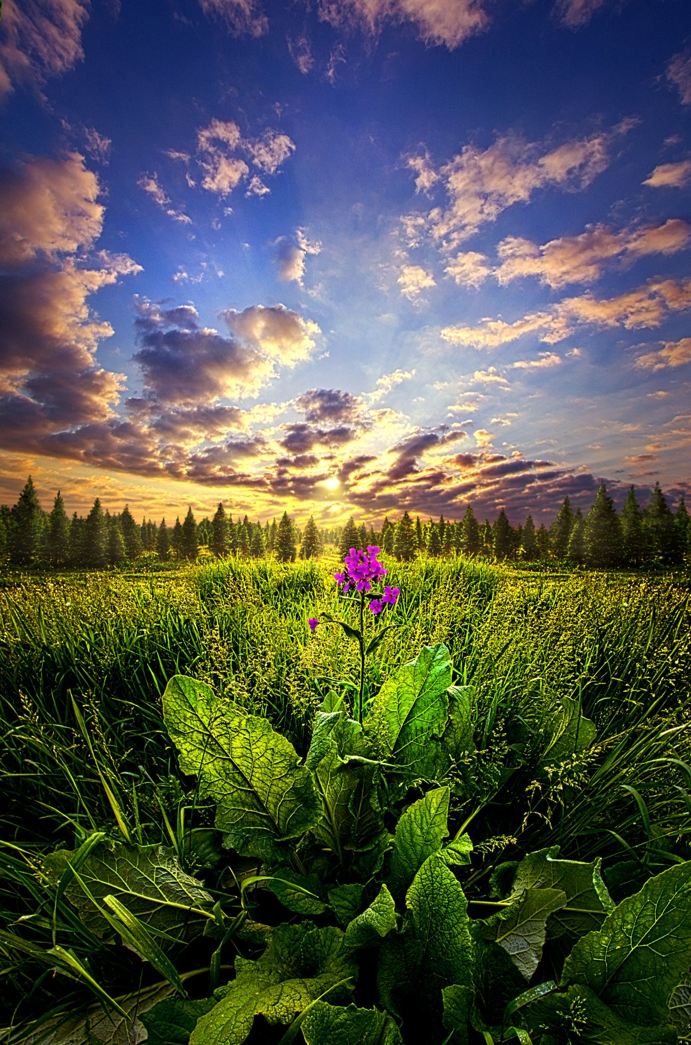 Landscaping - Longing By Phil Koch On 500px... #art #beam #clouds #field #flowers