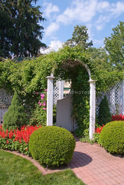Garden Arbor Entrance With Clipped Boxwood Planting Flowers