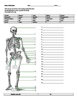 Bones worksheet w/answers | school | Worksheets, Skeletal system ...