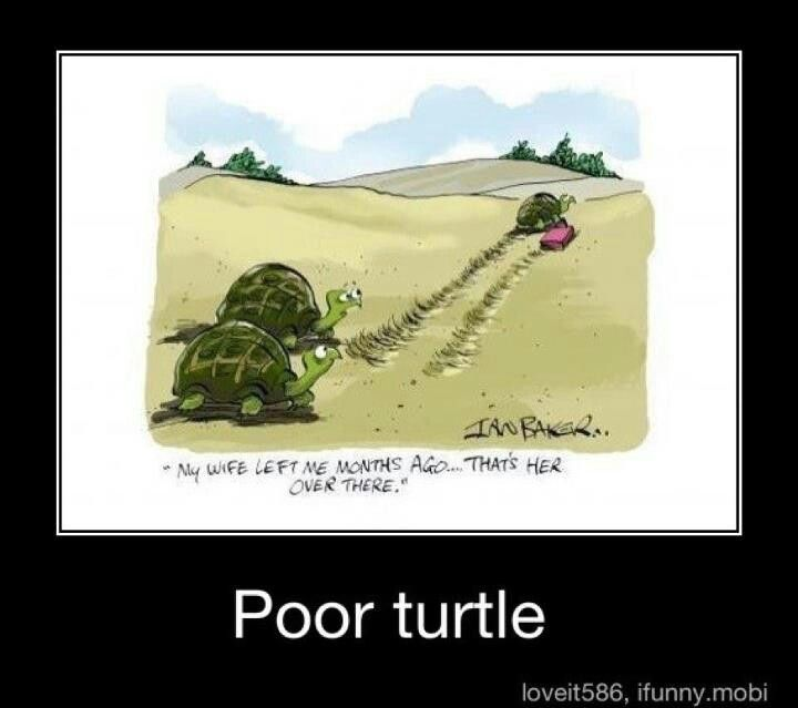 Turtle joke | For Shelby | Turtle love, Funny photos ...