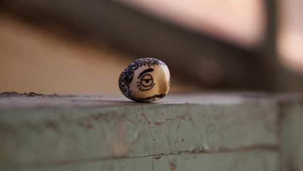 Photos of Hand Painted Chickpeas on the Streets of NYC
