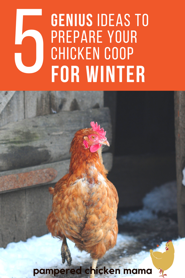 are your backyard chickens ready for winter here u0027s the best