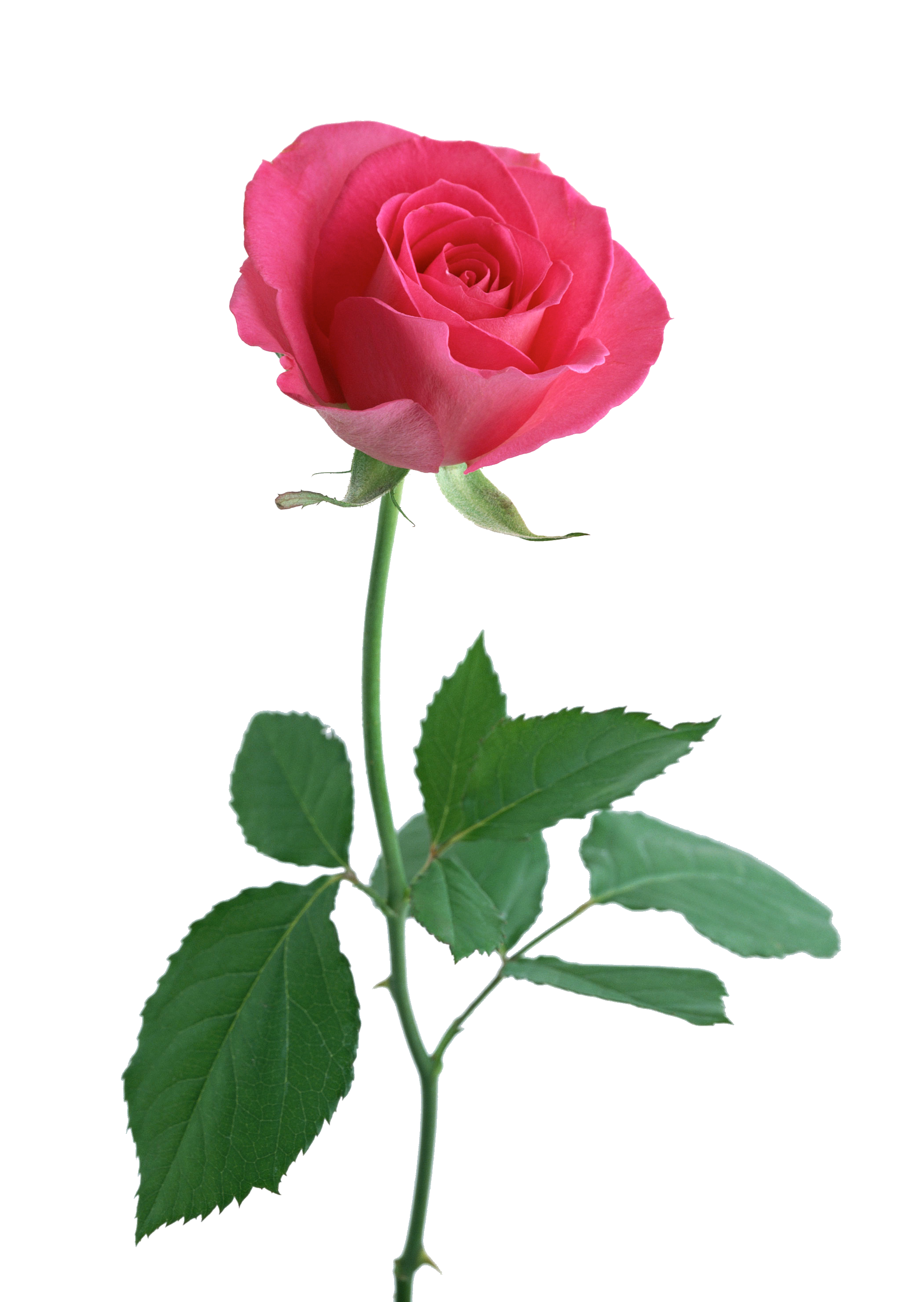 The Meaning Behind 12 Popular Valentine\'s Day Flowers   Flower ...