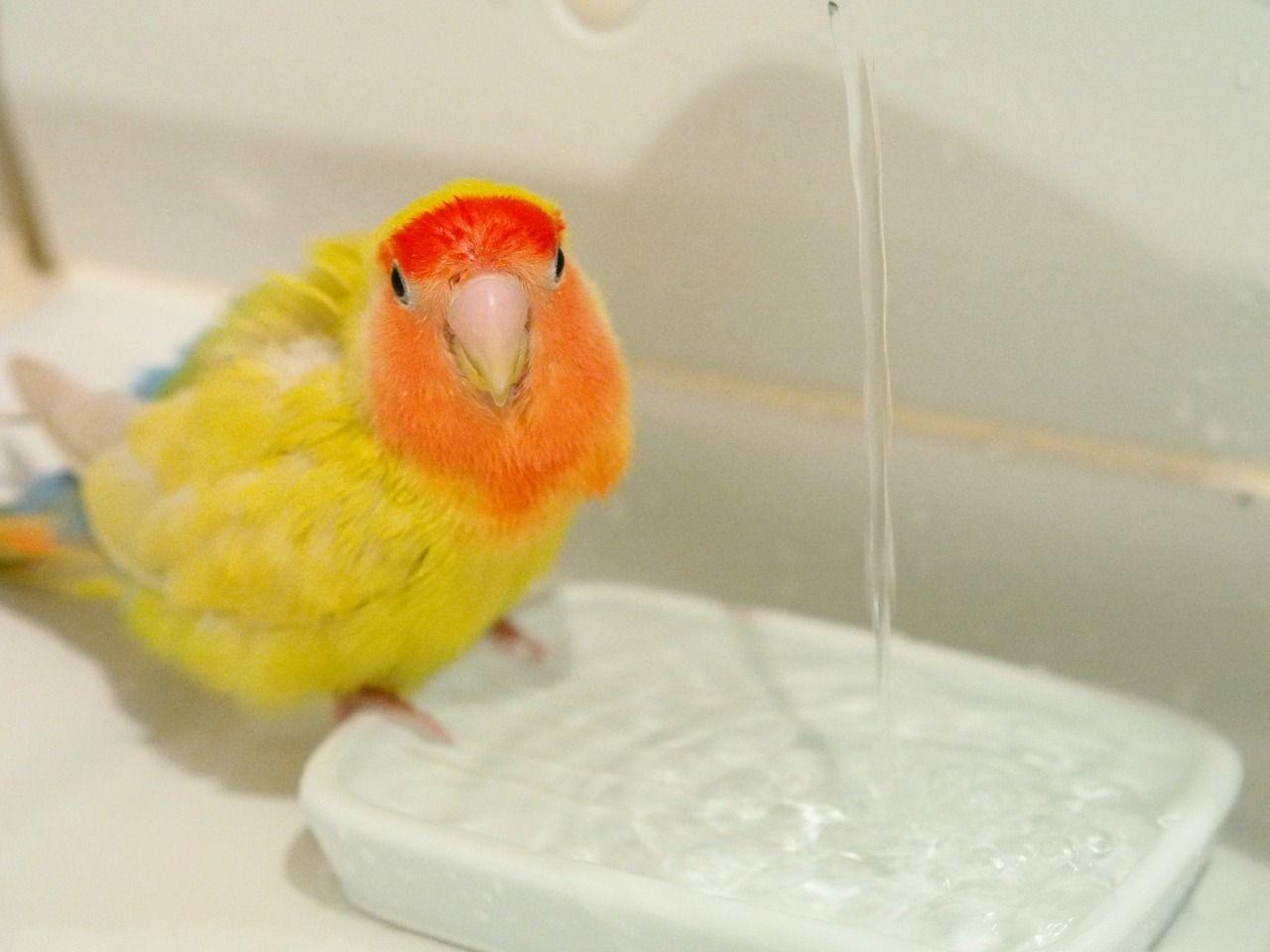 夏は水浴びをよくします。