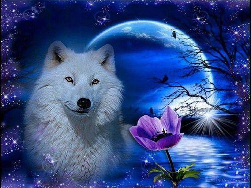 Schöne Wölfe