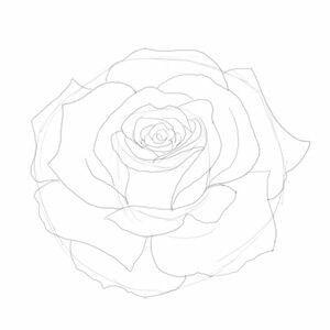 Vorlage Rose Rosen Zeichnen Aquarell Karte Malen Und Zeichnen