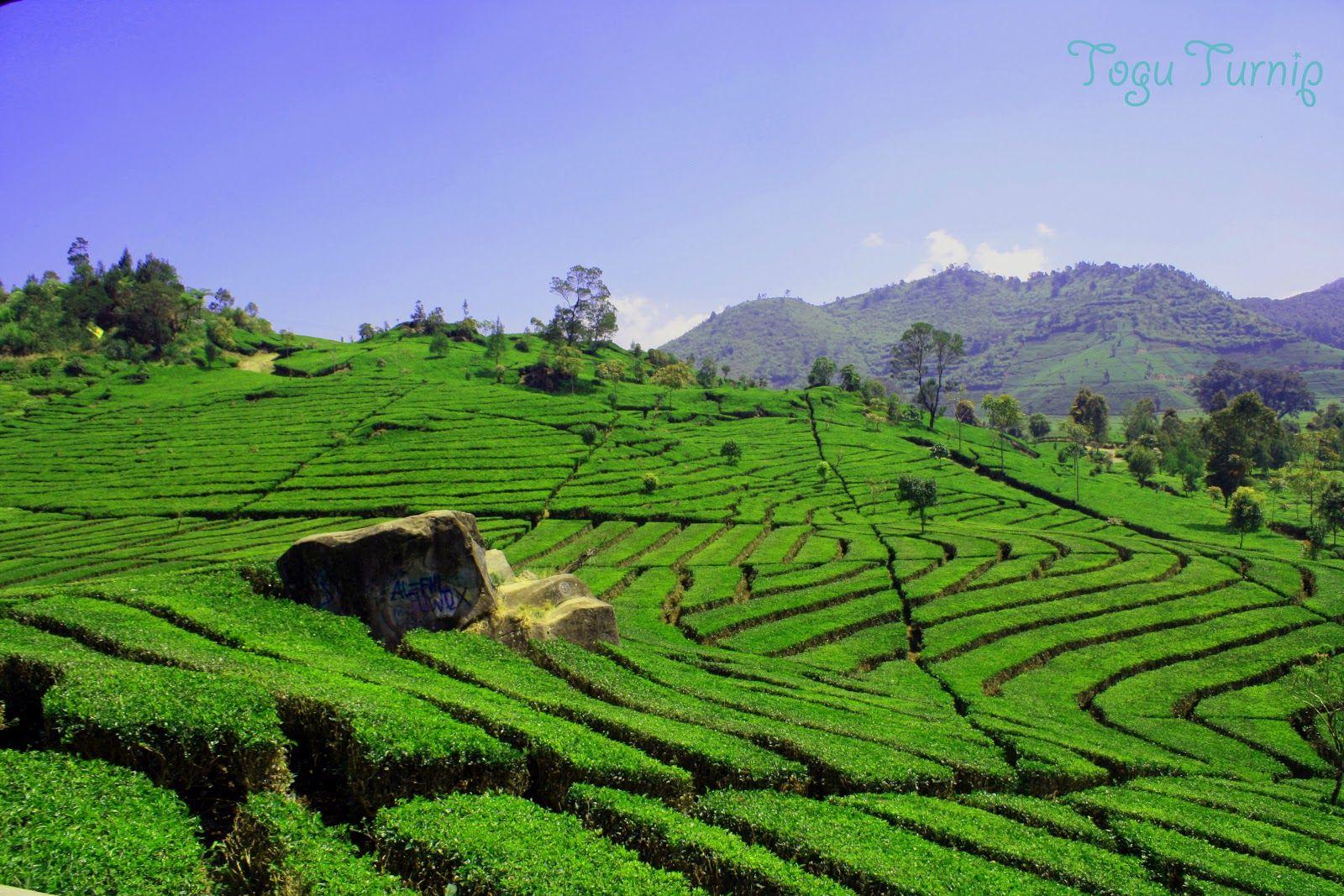 35 Foto Gambar Pemandangan Alam Indah Di Indonesia Foto Alam