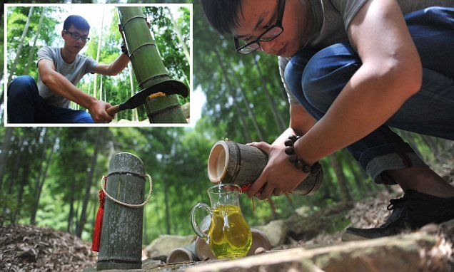 Villagers find new way to make liquor - by leaving them inside BAMBOO