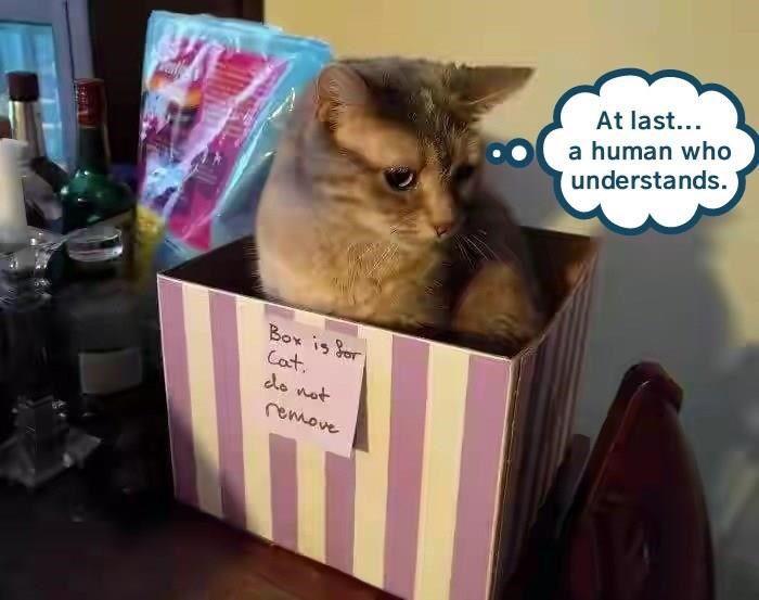 ad18cd7608 At last http   cheezburger.com 9111566848 Funny Cat Memes