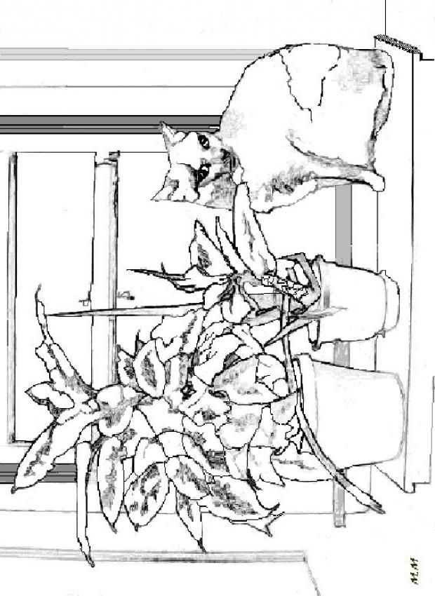Cat on the edge of the window coloring page nice cat drawing for kids more animals coloring pages on hellokids com