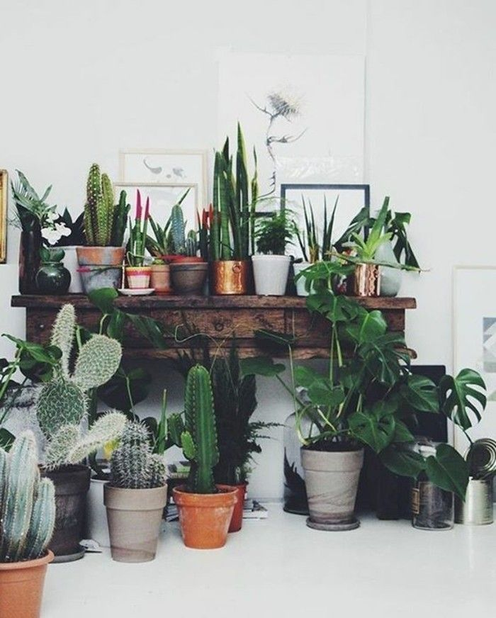 Inspirierende Dekoideen: kleiner Innen-Gartenbereich | Pflanzen ...