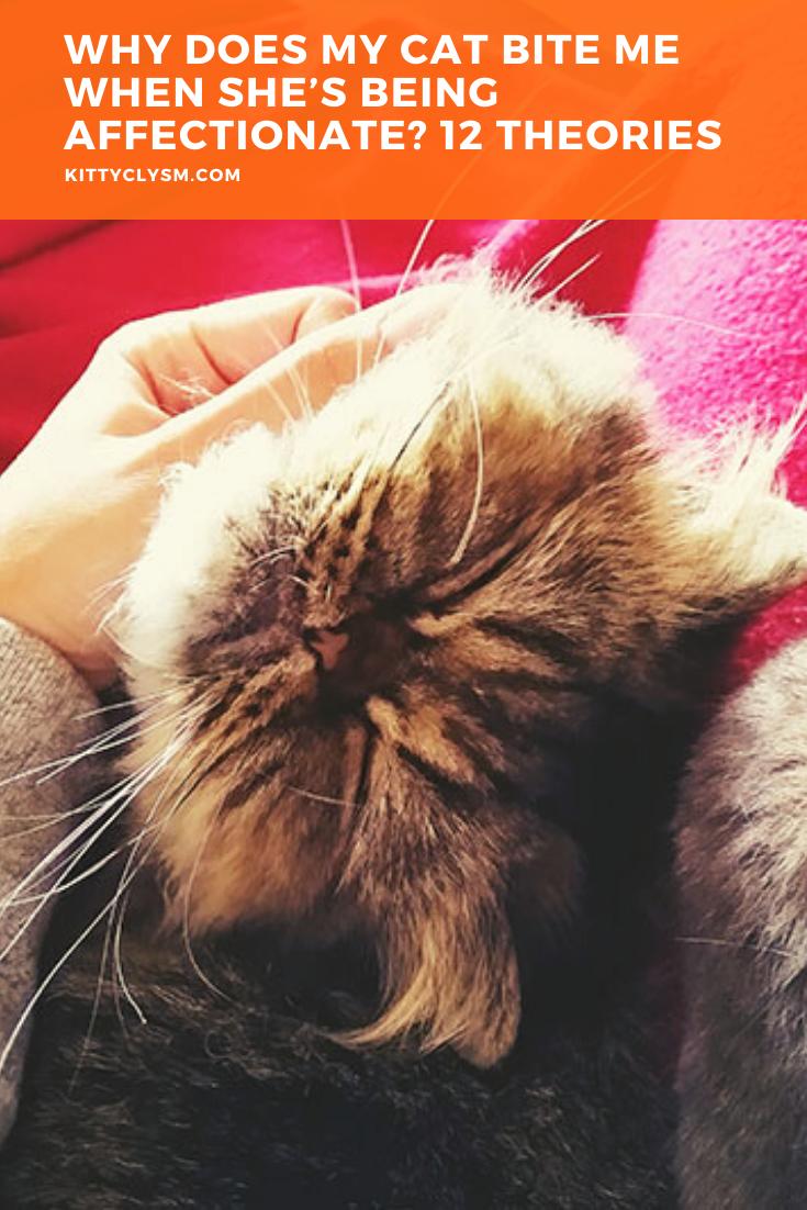 Pin On Cat Training Tips