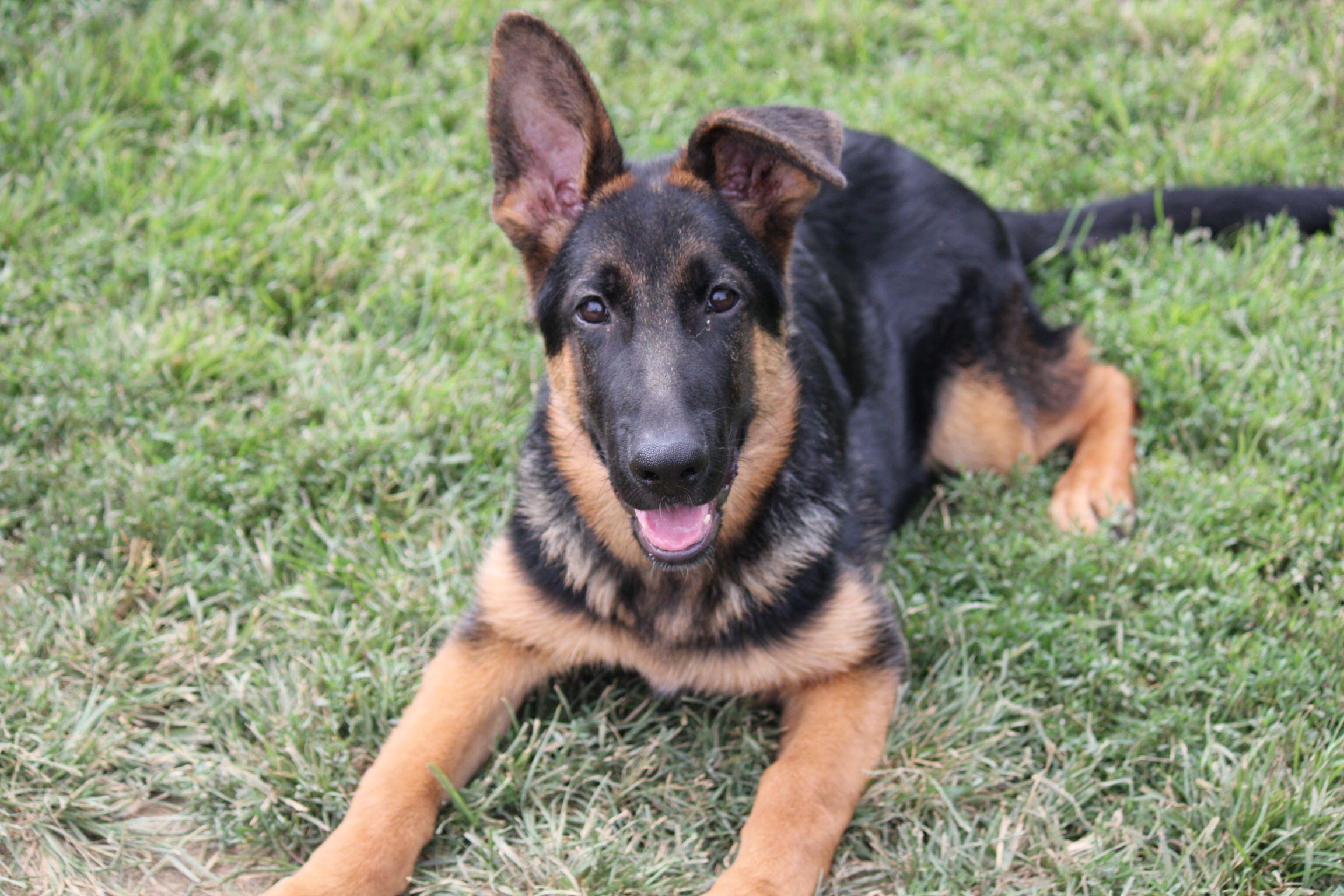 Bruno, 4 months