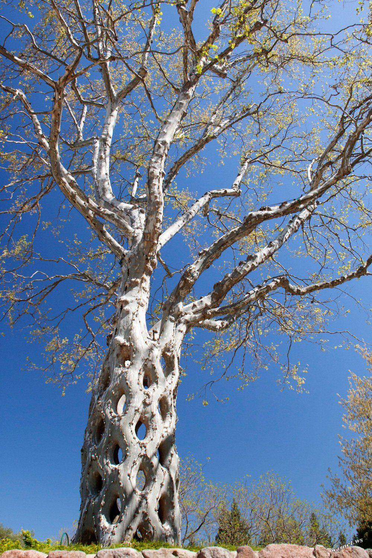Axel Erlandson Trees