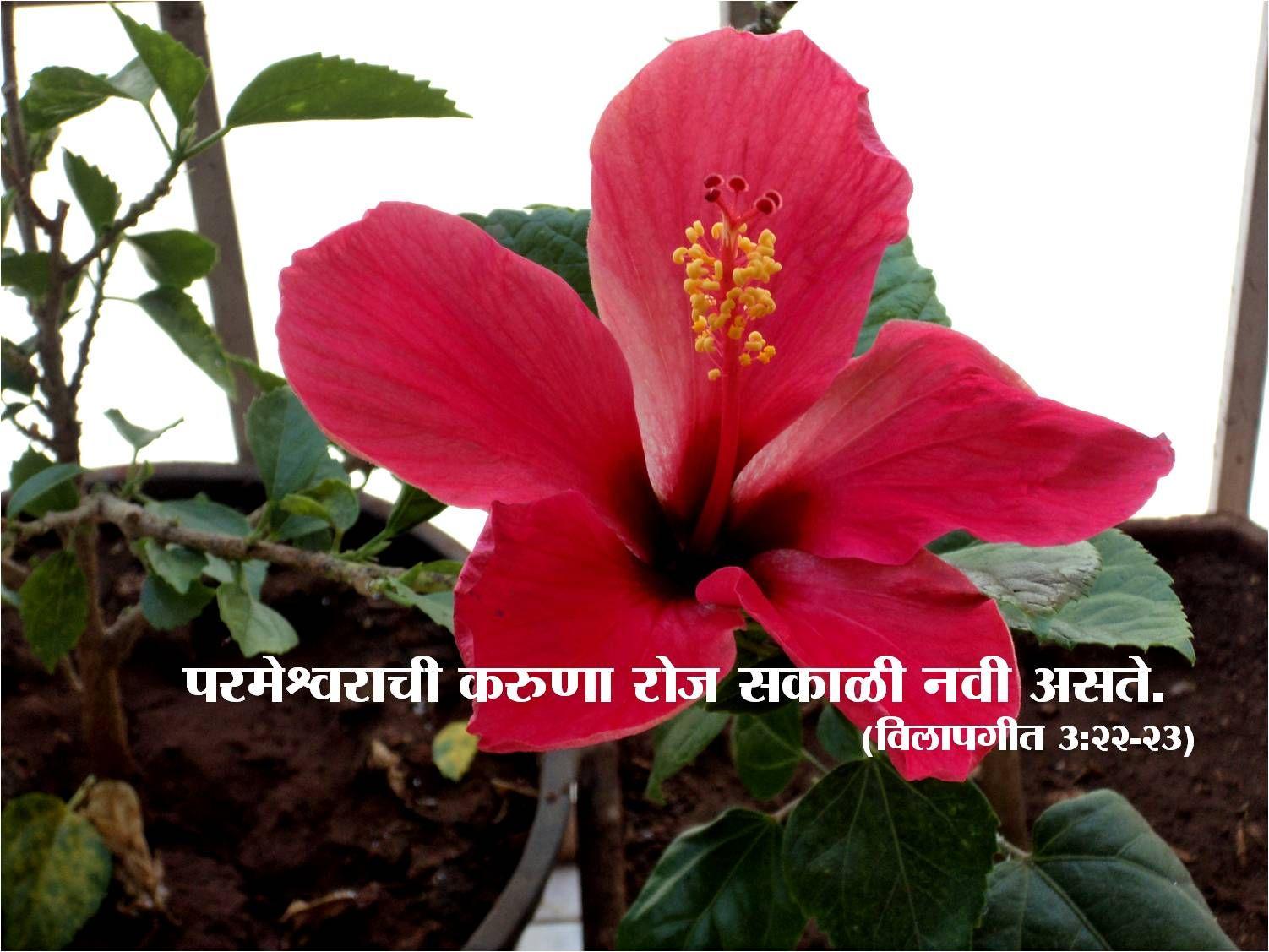 Marathi Good Morning Wallpapers Good Morning Wallpapers