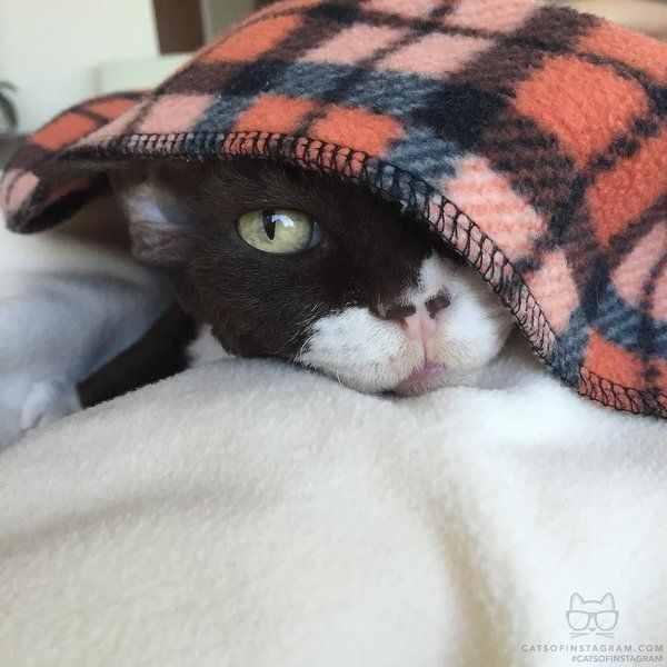Peek A Boo I See You Cats Of Instagram Cats Sleeping Funny Kitten Pictures