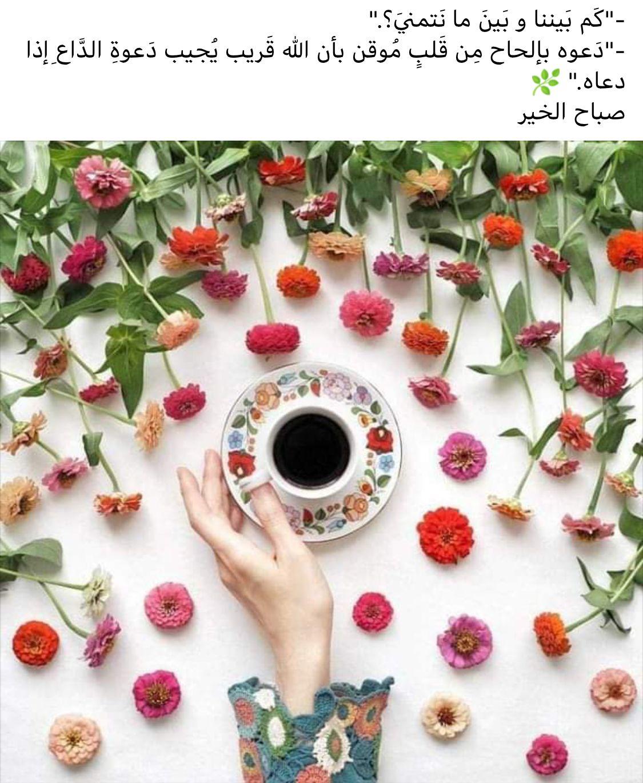 Pin by صورة و كلمة on صباح الخير ☼ Good Morning Flower