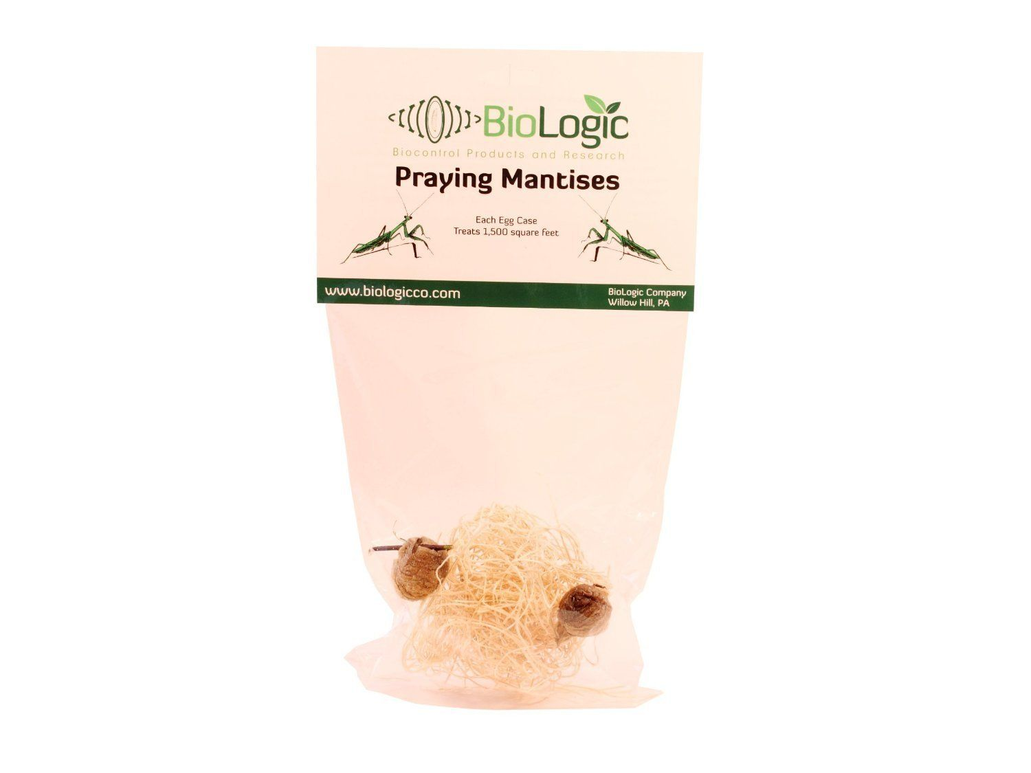 Amazonsmile Praying Mantis Egg Cases 2 Extra Large Cases Pest Controlling Insects Patio Lawn Amp Garden Pray Praying Mantis Candle S