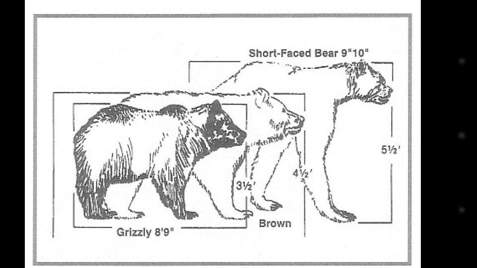 Era do gelo. Urso extinto