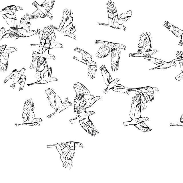 I've been drawing lots and lots of flying birds for patterns lately. These are…