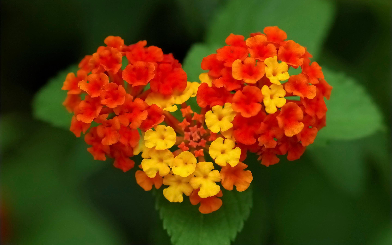Ultra Hd Wallpaper Flower 4k Nature Flower Garden Love Pink Hd