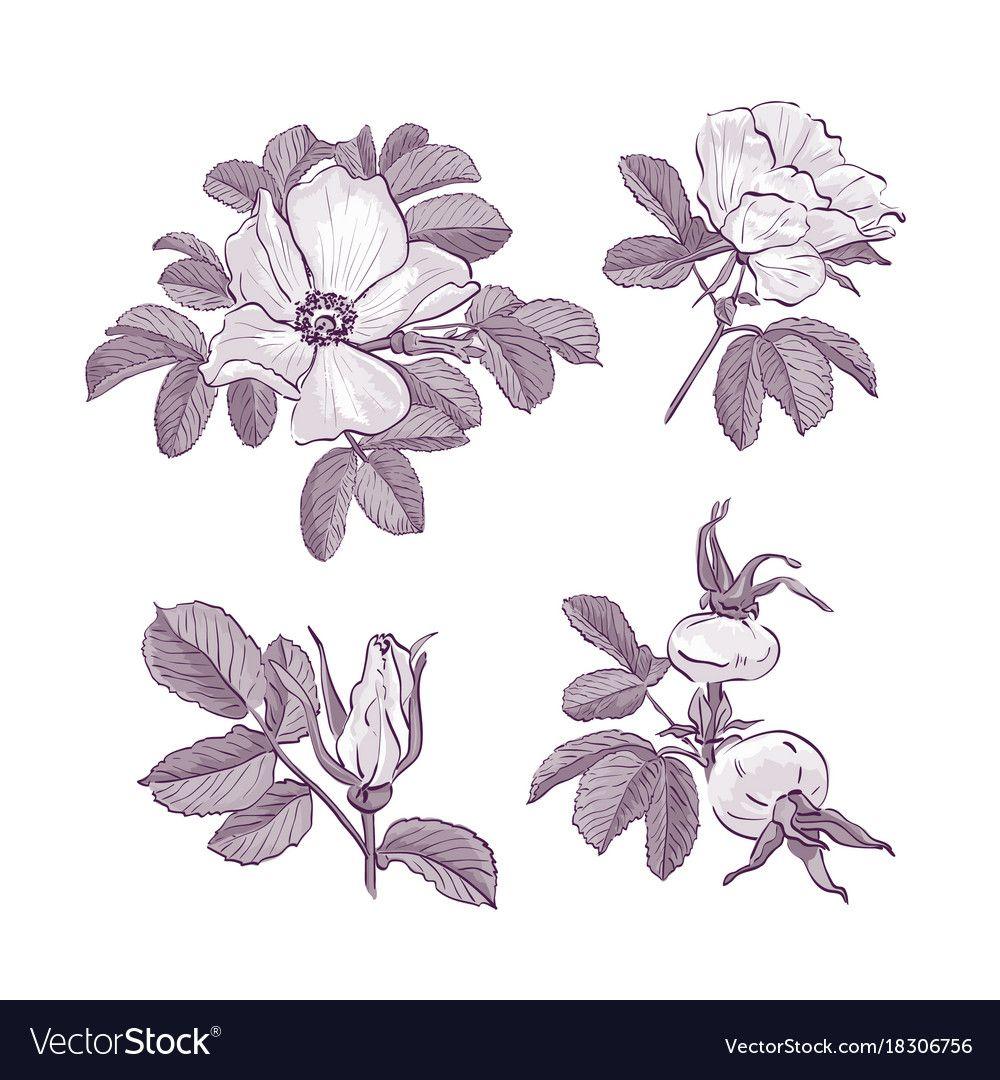 Pin by Tamara Nenchyn on flower in 2020 Botanical