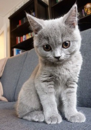 22 Purrfect Pictures Of Cats That Will Make You Just Say