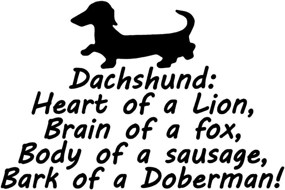 Cute Dachshund ! Funny T Shirt Brand New ADULT UNISEX ...