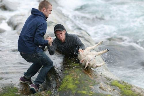 Norwegian teens form human chain to rescue lamb from freezing ocean