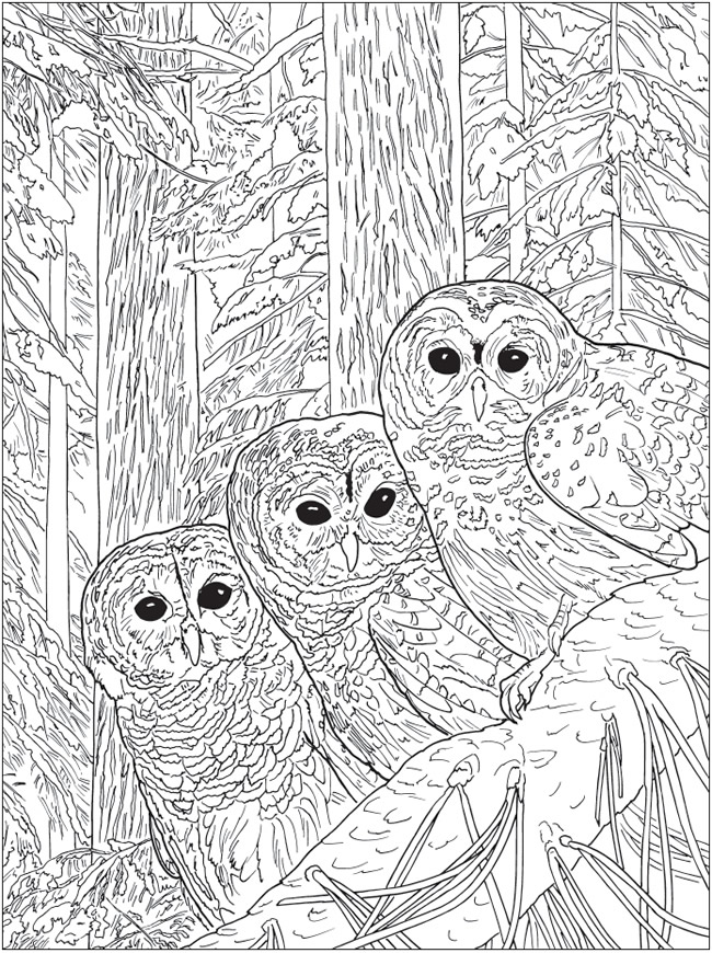 Welcome To Dover Publications Ch Beautiful Nature Designs Designs Coloring Books Coloring Books Bird Coloring Pages