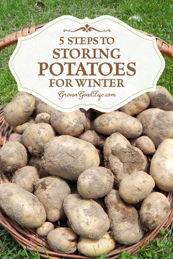 5 steps storing potatoes