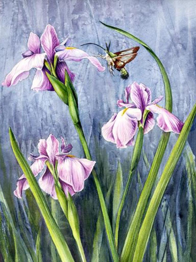 Pin By Svetla Kondr On Paintings Flora 1 Pinterest Flora And