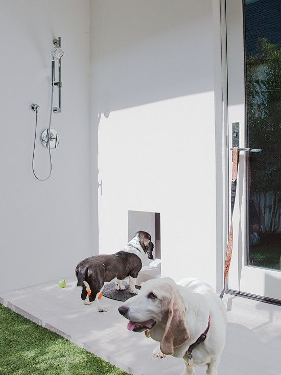 Pets Design Pictures Remodel Decor And Ideas Page 2 Doggy Doors