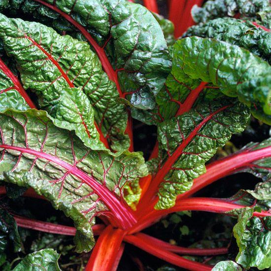 Rhubarb Companion Plants: Edible Landscaping, Plants, Edible