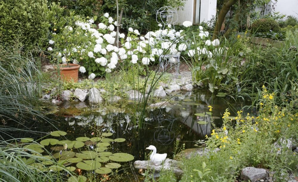 5 Tipps Für Klares Wasser Im Gartenteich Wasser Im Garten Water